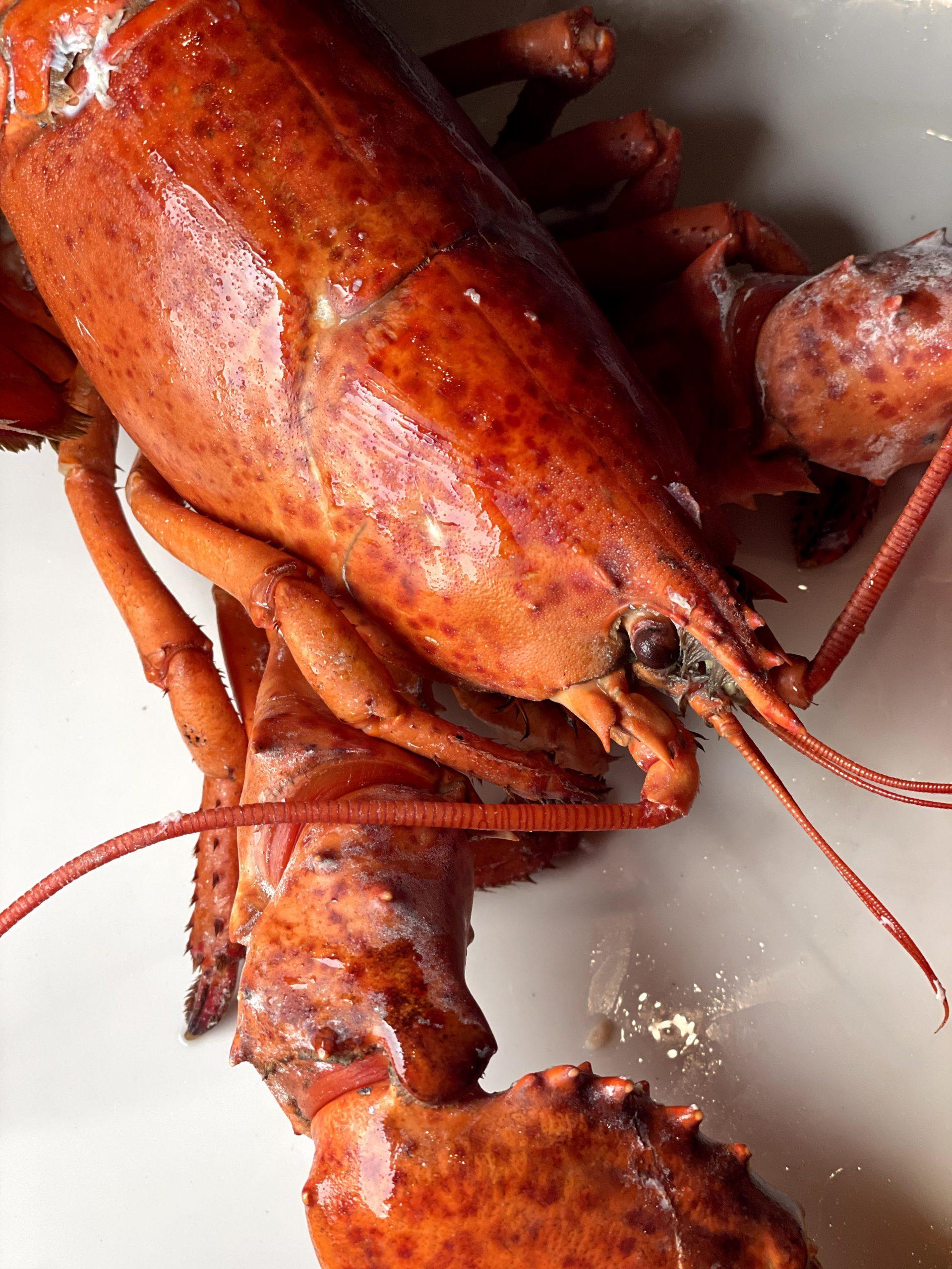 keg steak lobster yeg surf turf dinner